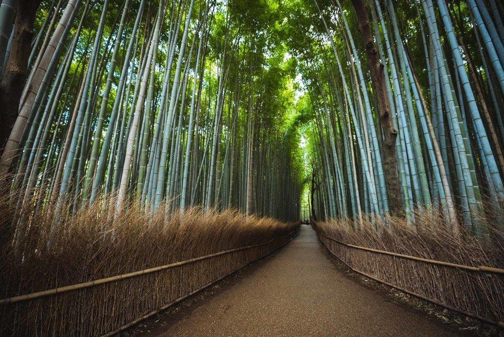 Japan Trip Part 1- Kyoto-92.jpg