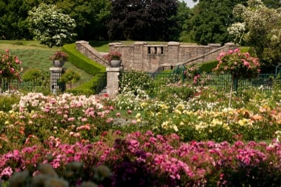 Bronx-botanic-garden-rose.jpg
