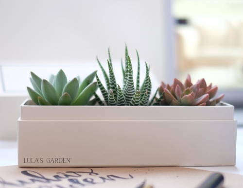 It's supposed to be really hard to kill a succulent. I've done it. Twice. PC: @lulas.garden