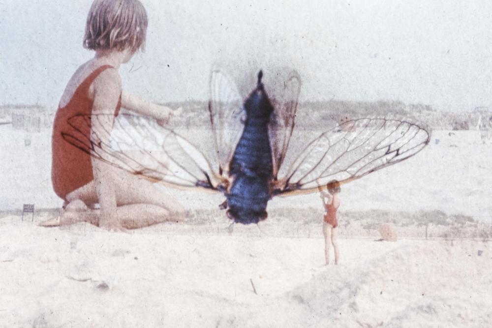 moth-HEYDT.jpg
