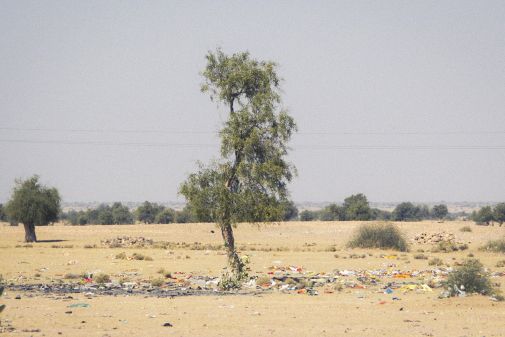 Trash&Tree-DesirableLife-HEYDT.jpg
