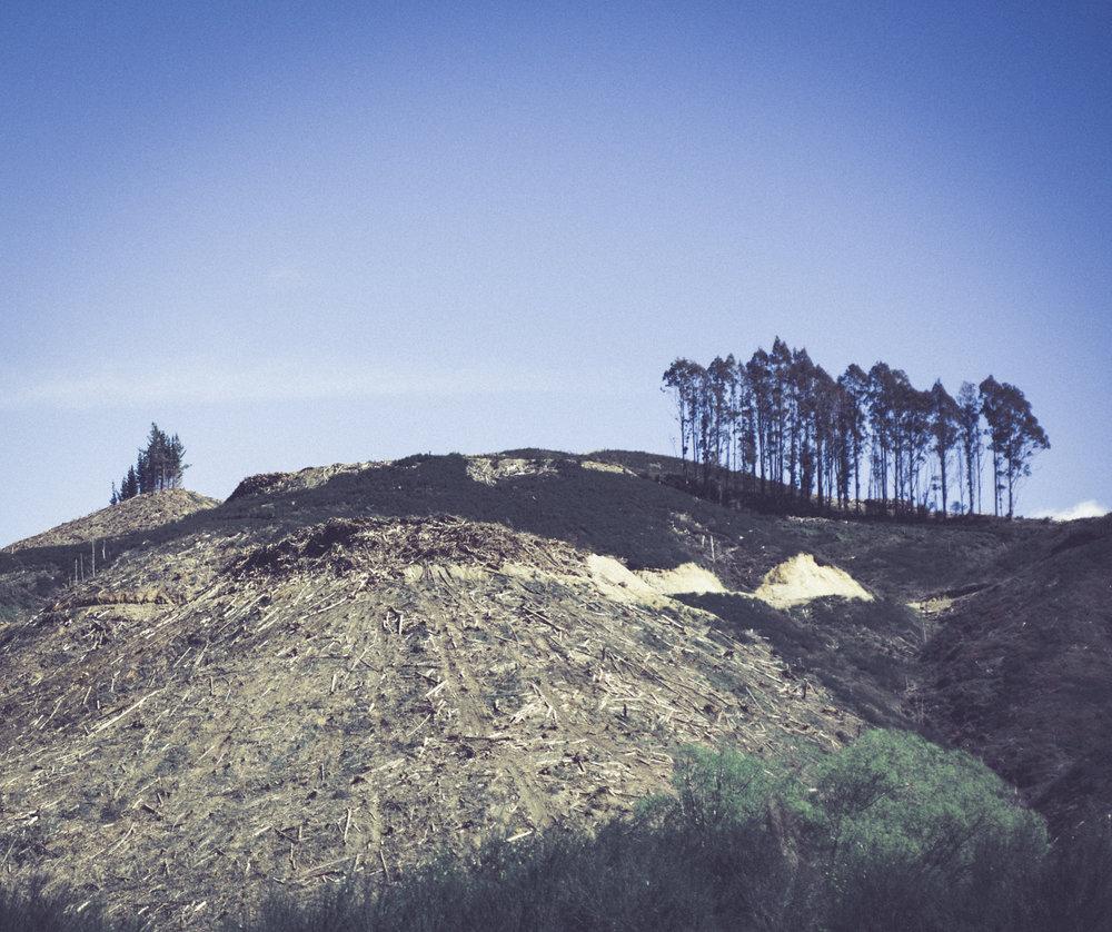 Deforestation-NewZealand-2016-HEYDT-906.jpg