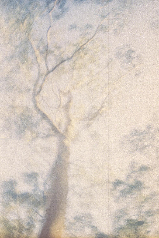Eucalyptus-SawDust-HEYDT.jpg