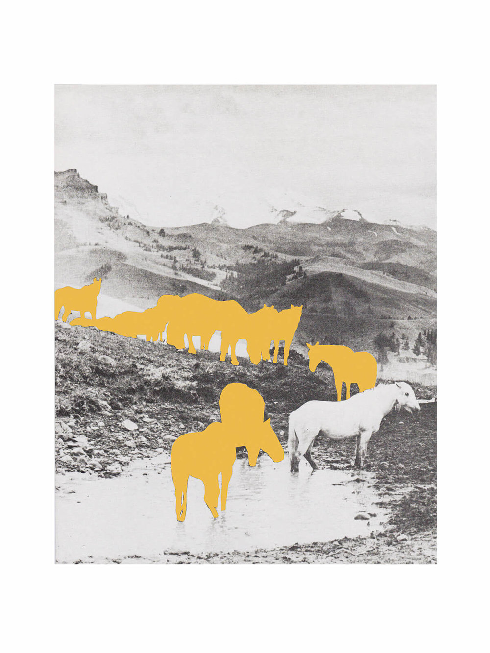 Ten yellow horses one white, Petra Wester Nordgren    50x70 , 750 SEK