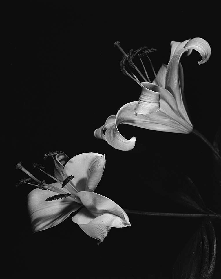 Uemura_flowers024.jpg