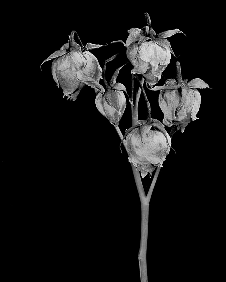 flower_condition_50.jpg