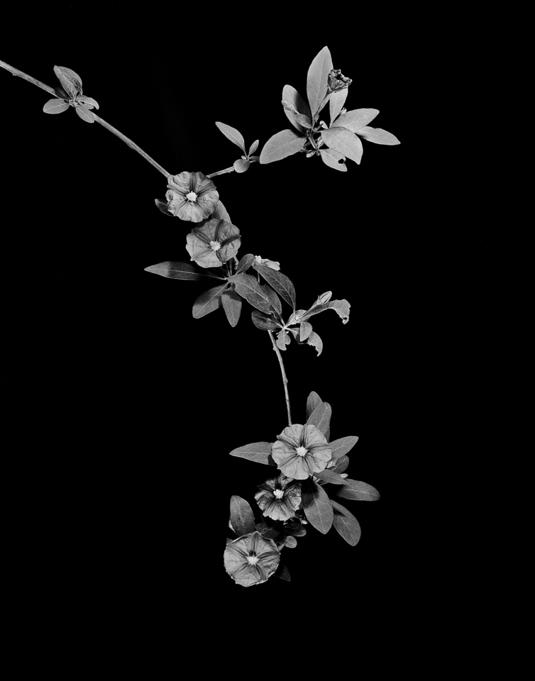 flower_condition_100.jpg