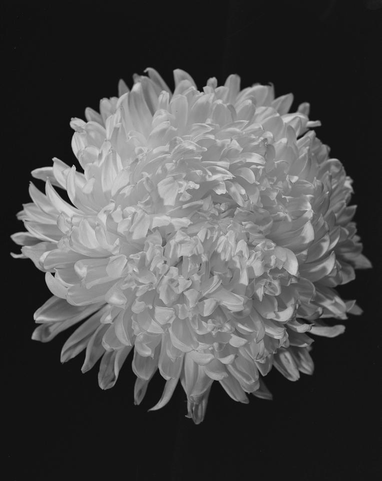 Flower Condition 2016