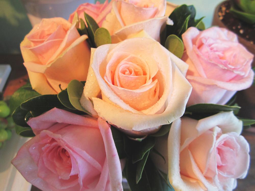 2_roses.jpg