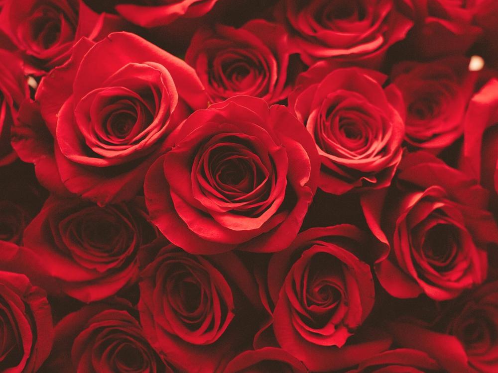 3_roses.jpg