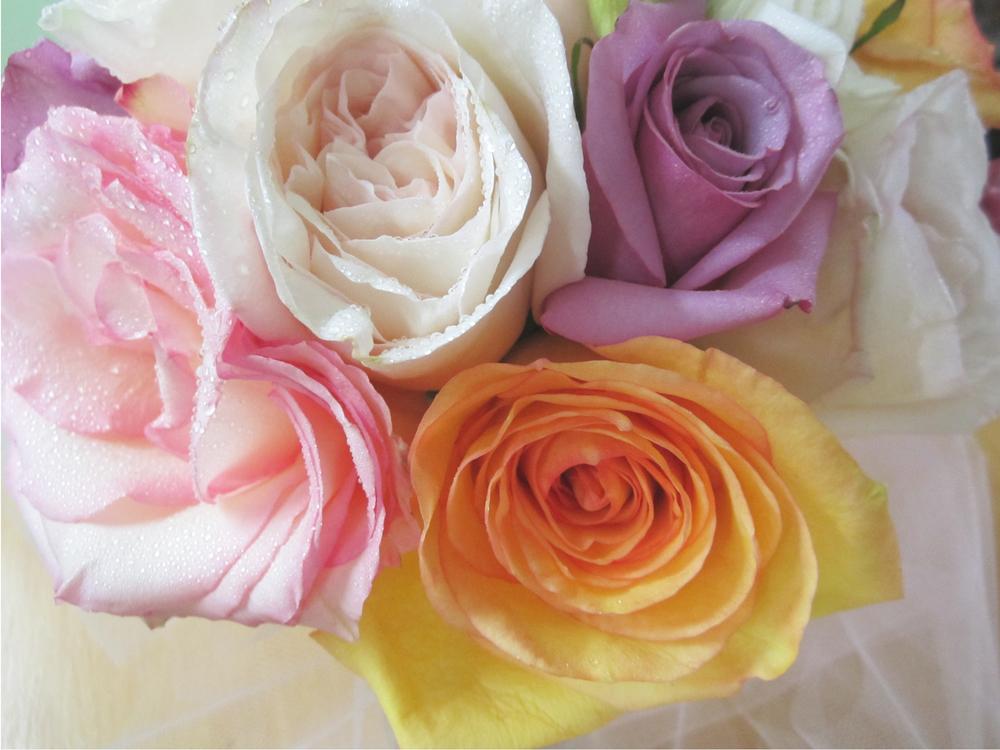 1_roses.jpg