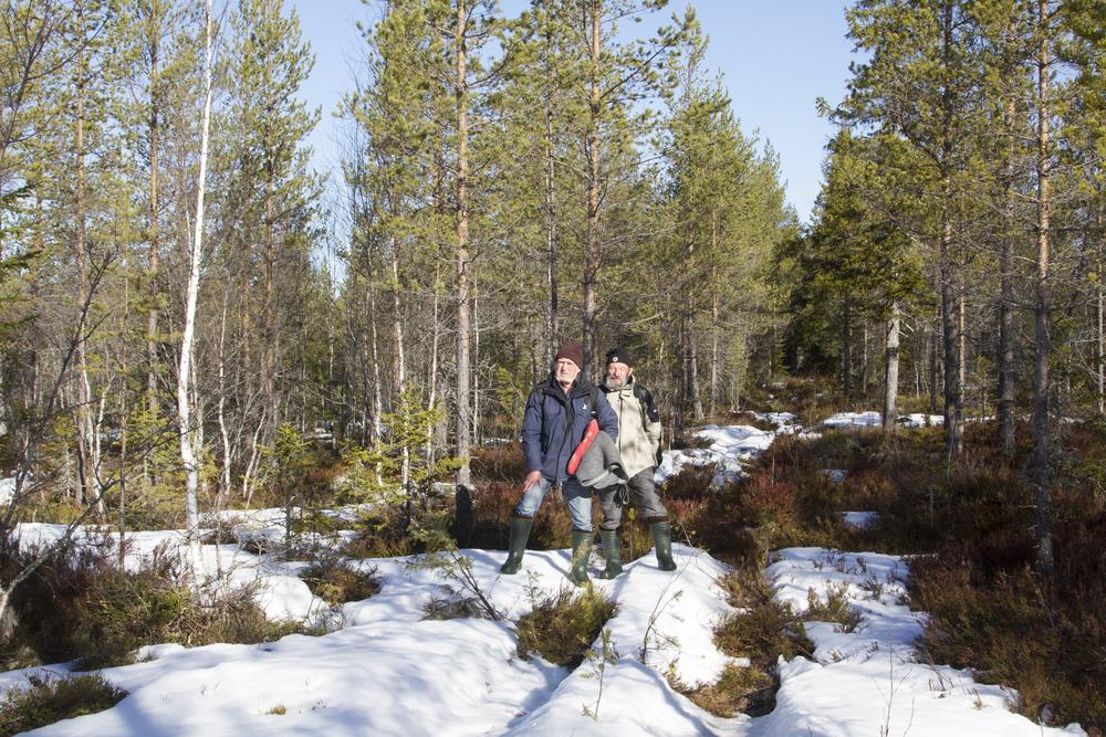 Wald  Mittelschweden  Birkhahnbalz  Mai 2015