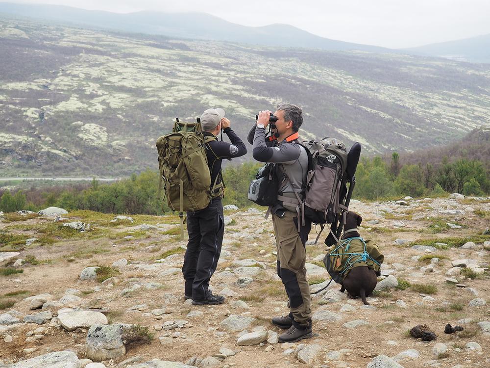 Sigbjørn, Tell  und ich auf  der Suche im  Dovrefjell