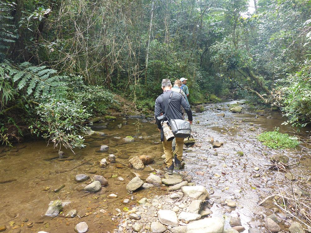 Im Regenwald von Madagaskar.  Ranomafana