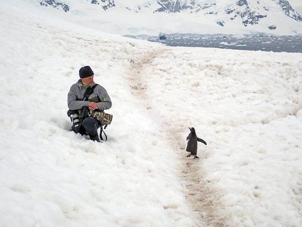 Antarktis  am Pinguinhigway  Dezember 2018