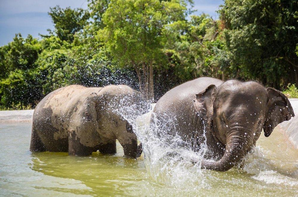 elephant 6.jpeg