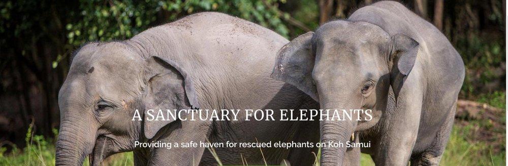 elephants 4.jpeg