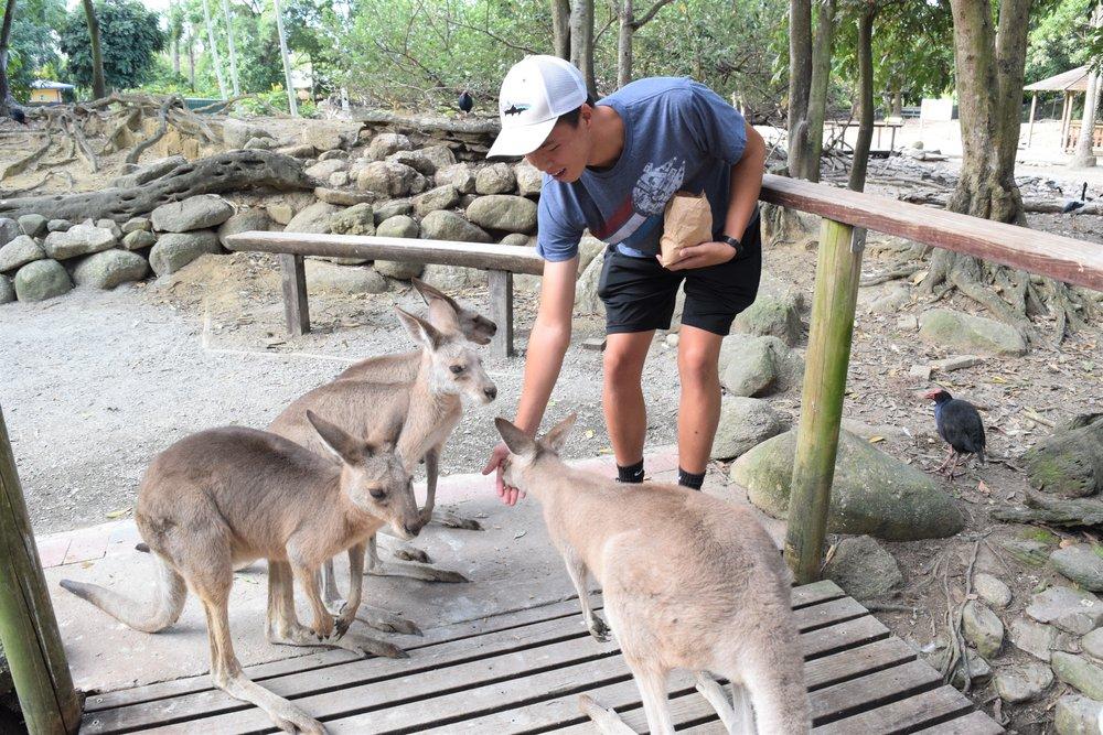 Kangaroos on Kangaroos