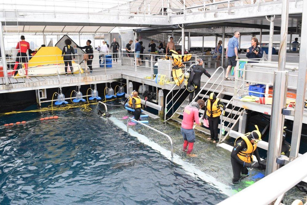 The scuba area