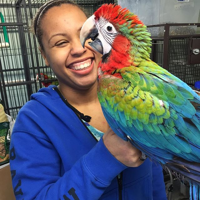 #parrot #parrots #wingingitaviary #parrotsofinstagram #bird #birds #birdsofinstagram #animal #animalsofinstagram #parrotlover #birdlover #animallover #parrotsofig #animals #animalsofig #parrotstore #birdstore #longisland #newyork #birdsofwia #parrotny #africangreycongo #hyacinthmacaw #flamemacaw