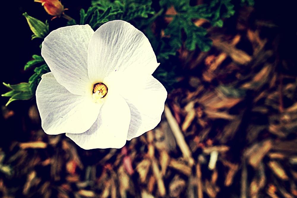 FLOWER6NT.jpg