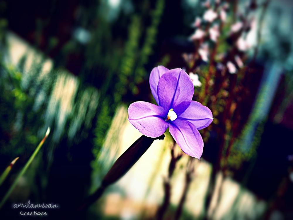 flower3040.jpg