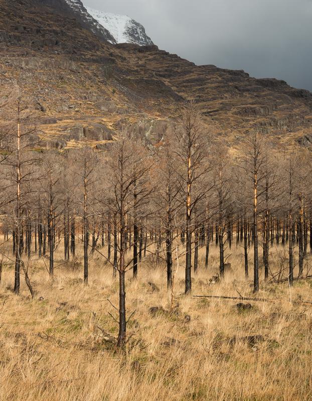 Schotland-7.jpg