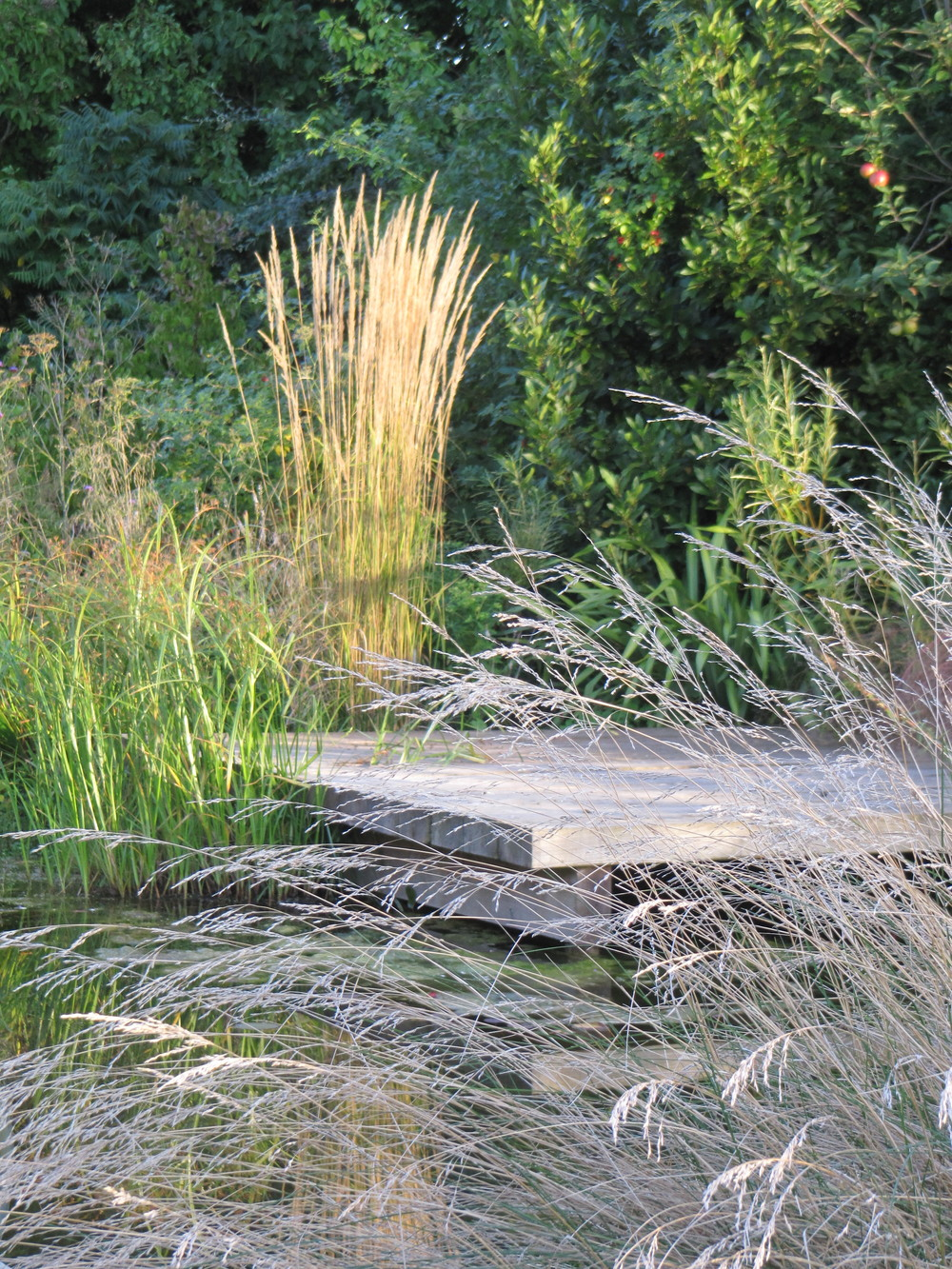 Calamagrostis 'Karl Foerster' behind a garden deck with Deschampsia cespitosa in front.