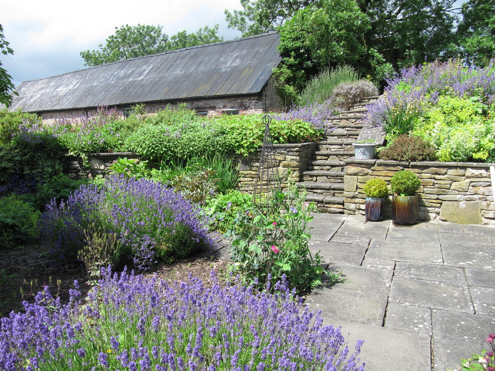 Traditional farmhouse garden with lavender surrounding the old stone paving.