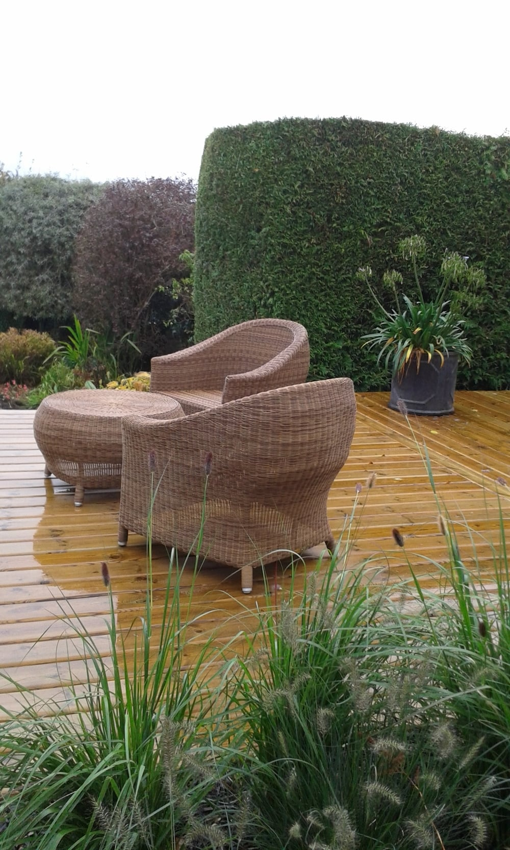 A contemporary timber deck, a few grasses and stylish furniture transform a unused area by a smartly trimmed hedge.