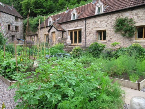 Front garden vegetables