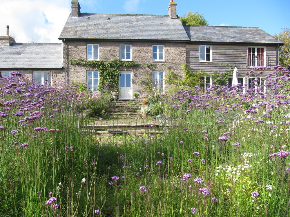 A pretty country cottage where Verbena bonariensis has self seeded everywhere with glorious abandon.
