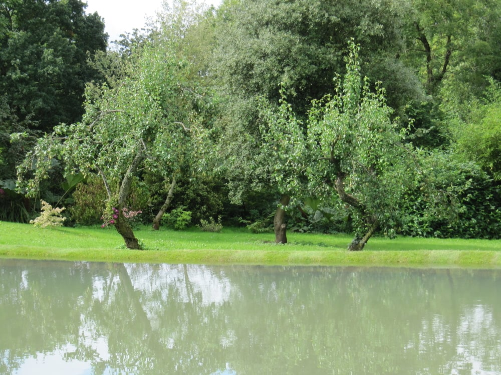 Old apple trees stand in a perfectly manicured lawn behind an open reflecting pool, a picture of tranquility.