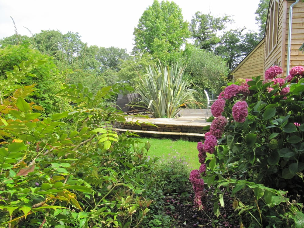 A glimpse through Hydrangea and Mahonia of an imposing Phormium retained as the centre piece of a curving contemporary terrace.