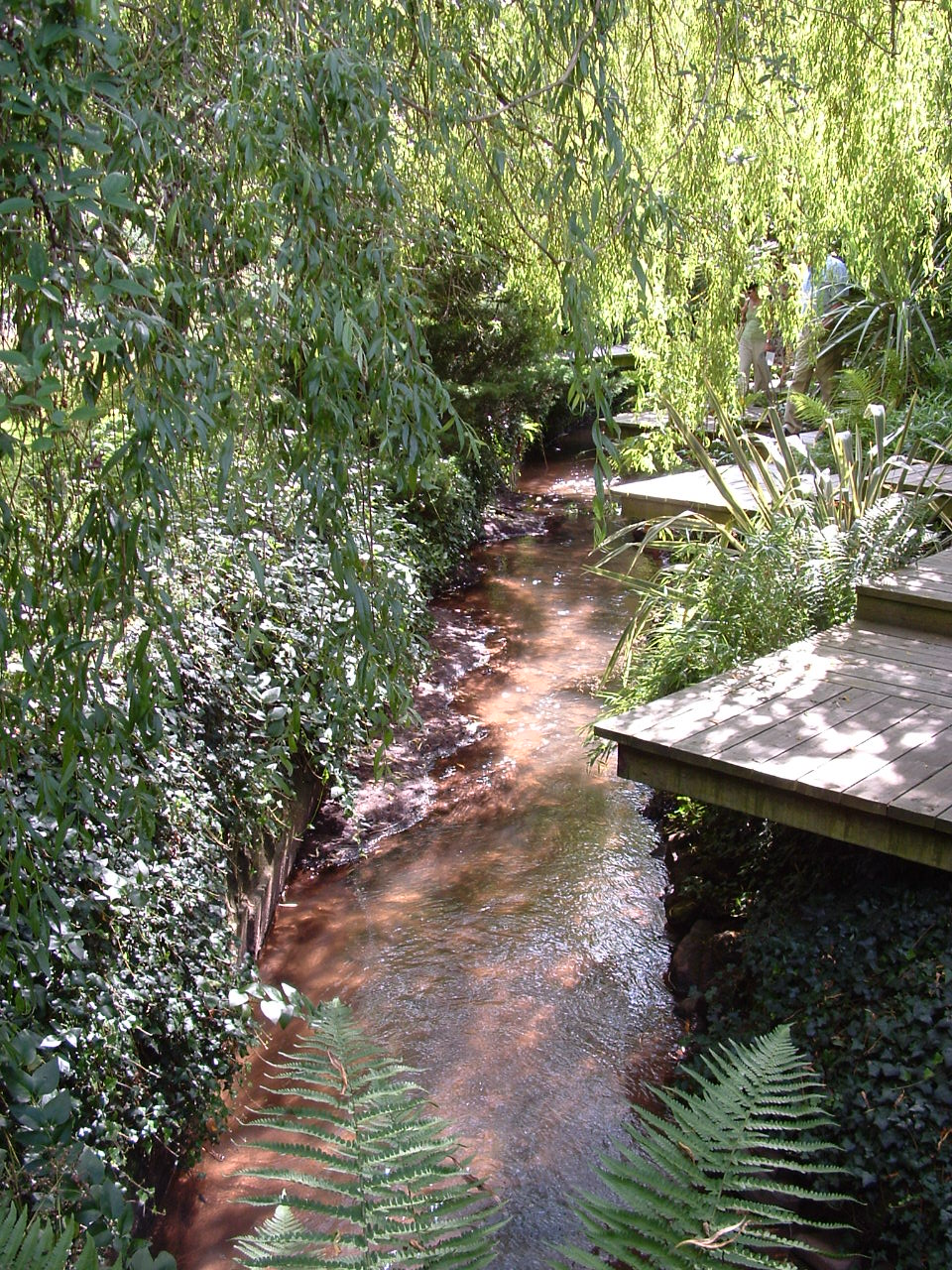 A timber walkway allows access across and around this little stream in a large garden in Herefordshire