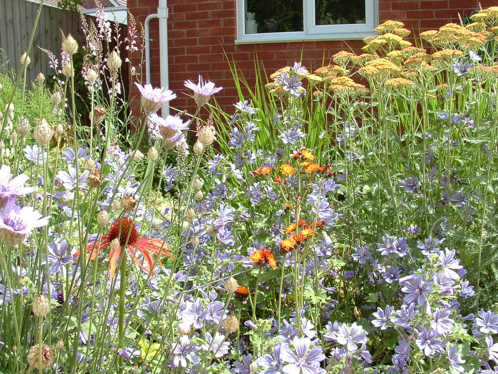 An explosion of summer flower colour fills a bed, transforming the rear garden of a residential development garden into insect heaven.