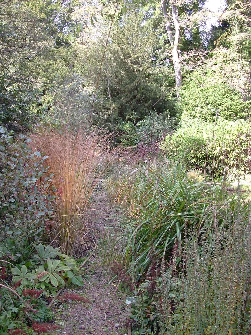 An autumn tinted Panicum grass forms a temporary focal point among lush woodland planting