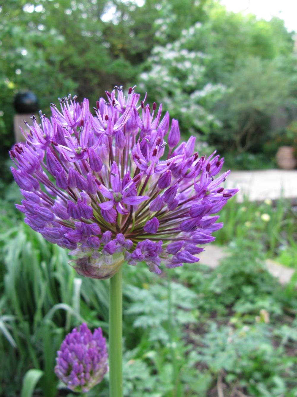 Close ups flowers 045.jpg