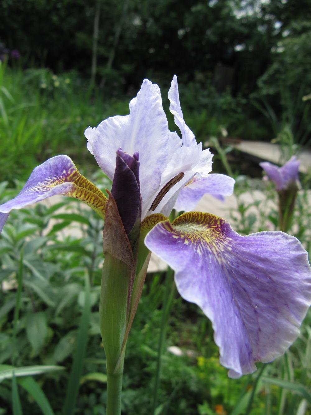 Close ups flowers 074.jpg