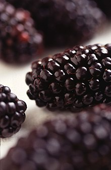 220px-Black_Butte_blackberry.jpg
