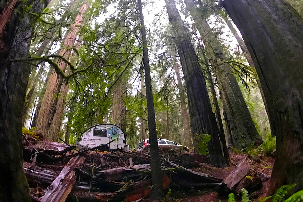 The Hub Peacebuilder Tour travels through the Giant Redwoods on its way down the coast from the Rotarian Action Group for Peace headquarters in Portland, OR.