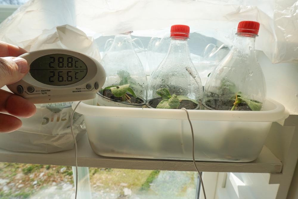 7/7 - Dekk til alt med hvit plast så temperaturen ikke blir for høy.