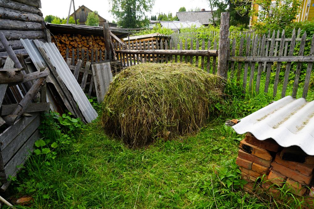 Gress samles i haug for bruk i neste års poetåker. Fra en datsja i Russland.