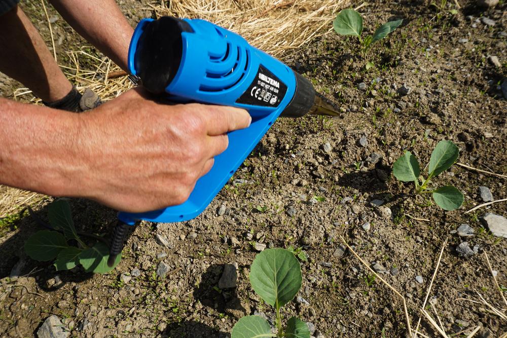 Elektrisk varmluftspistol er enkelt og effektivt mot nyspirt ugress - men vær forsiktig med grønnsaksplantene