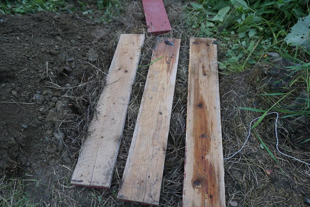 Etter å ha fylt godt rundt og over kassen med tørt gress, legger vi planker for å unngå at det blir tett for grønnsakene vi skal lagre.