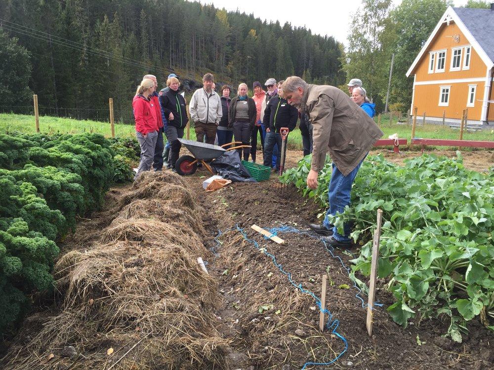 Kursene vi holder, tar utgangspunkt i hva som lar seg dyrke med utgangspunkt i en plen, en spade og frø.Resten blir improvisering med utgangspunkt i de ressursene du klarer å samle i trillebåravstand til hagen.