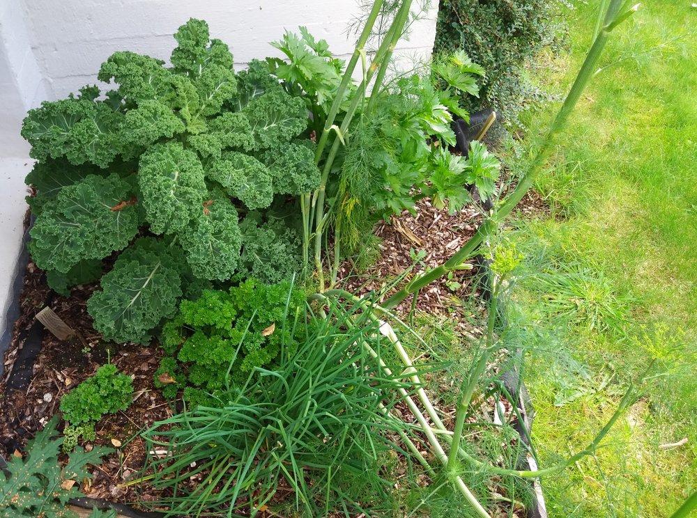 Alle kriker og kroker er i bruk og mange grønnsaker kan det høstes av hele året langs Stadt landet.