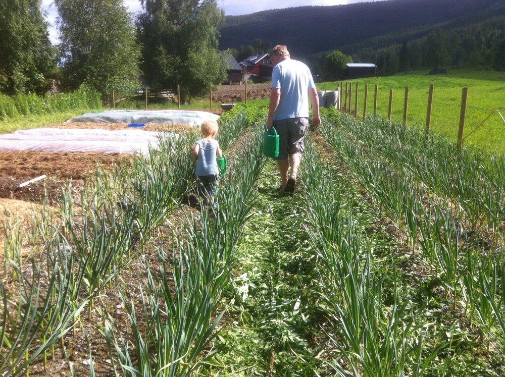 Liten og stor gartner i hagen vår 400 moh på Leira i Valdres. Bruker mye gressdekke gjennom sommeren.
