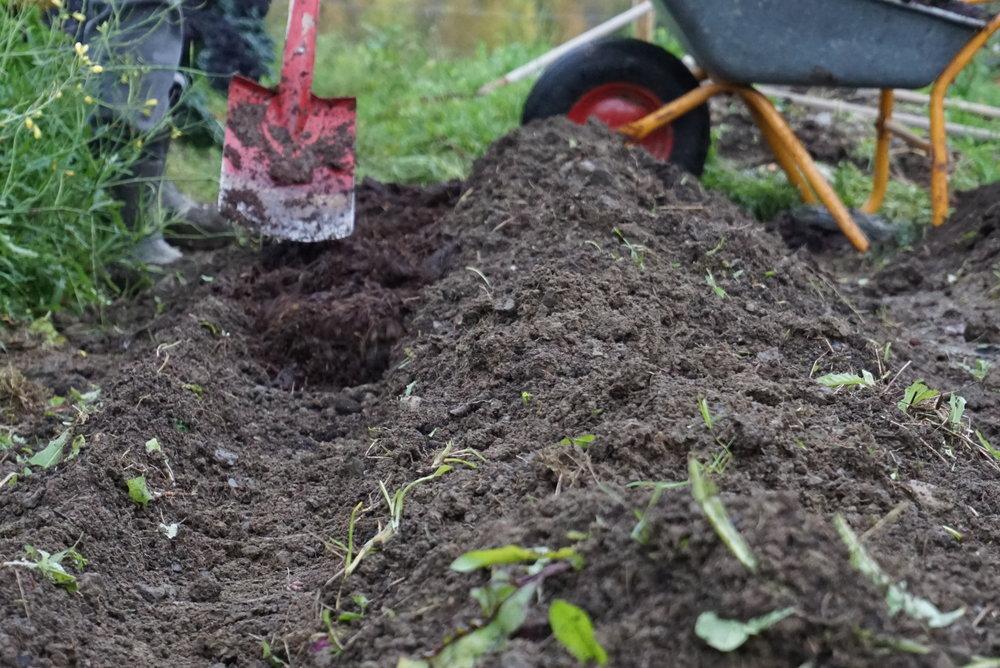 Å mate jorda ved å grave ned komposten og så dekke den med jord, er en sikker måte å redusere næringsutvasking på.