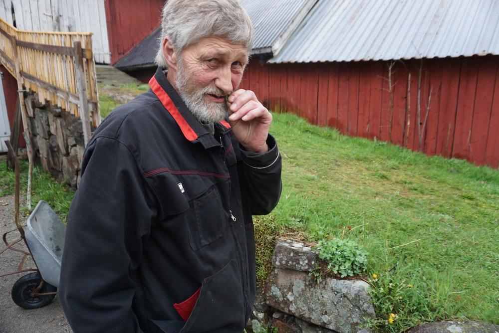 Borger Holm høster fortsatt fra sin ville bestand av karve langs låvebrua. Mor stelte nok litt mer med de, sier han. Hun pleide å grave opp røtter å plante de et sted de fikk bedre forhold. Men den er en plante som klarer seg selv om det er karrig.